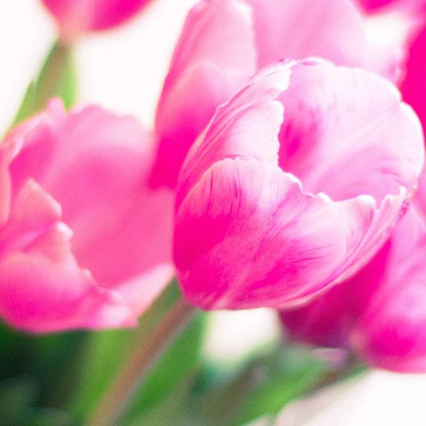 Ein Strauß rosafarbener Tulpen
