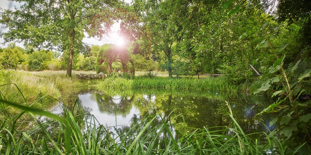 Ein kleiner Teich liegt inmitten von Wiesen und Bäumen