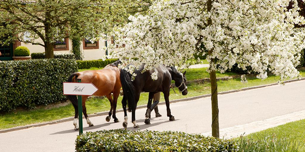 Zwei Pferde laufen auf dem Gelände des Linslerhofs