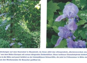 pflanzen-blueten-garden
